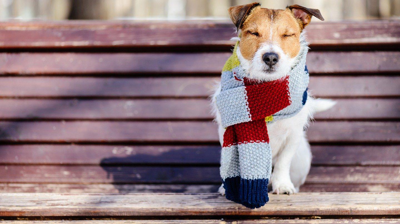 Ob Hund oder Mensch, Halsschmerzen kann jeden erwischen. Alles was jetzt hilft.